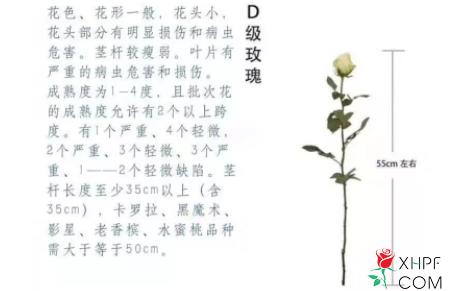 D级鲜花图片