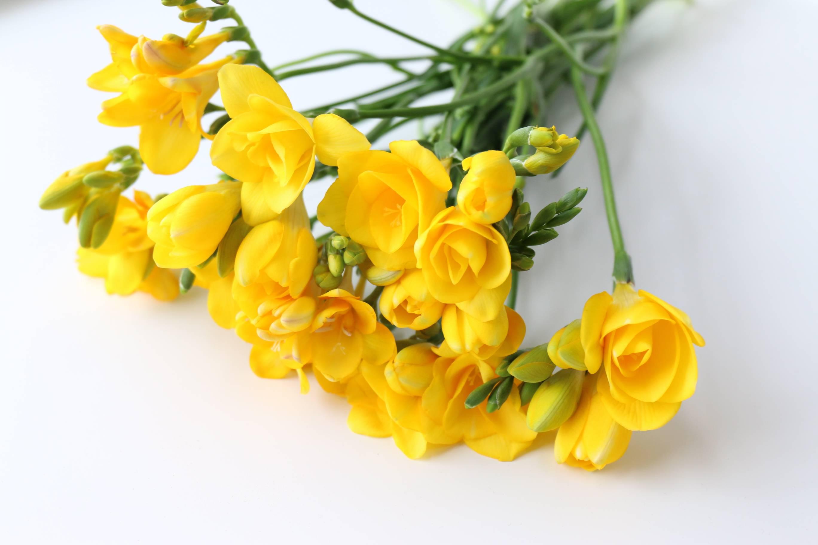 香雪兰黄色