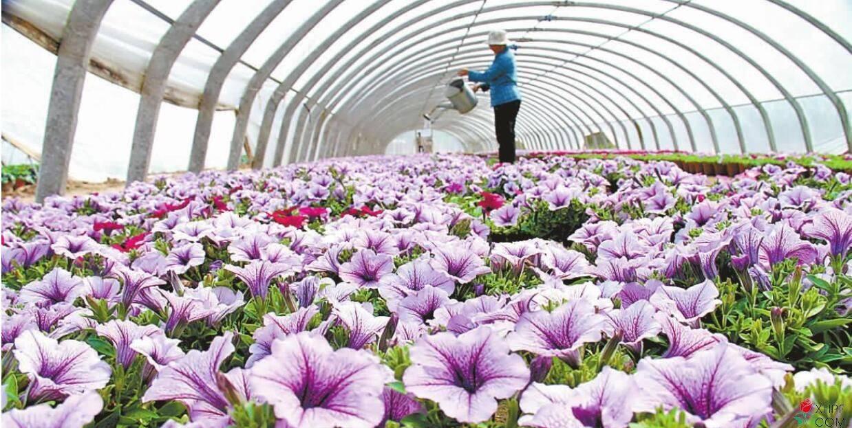 花卉产业的发展趋势有哪些?