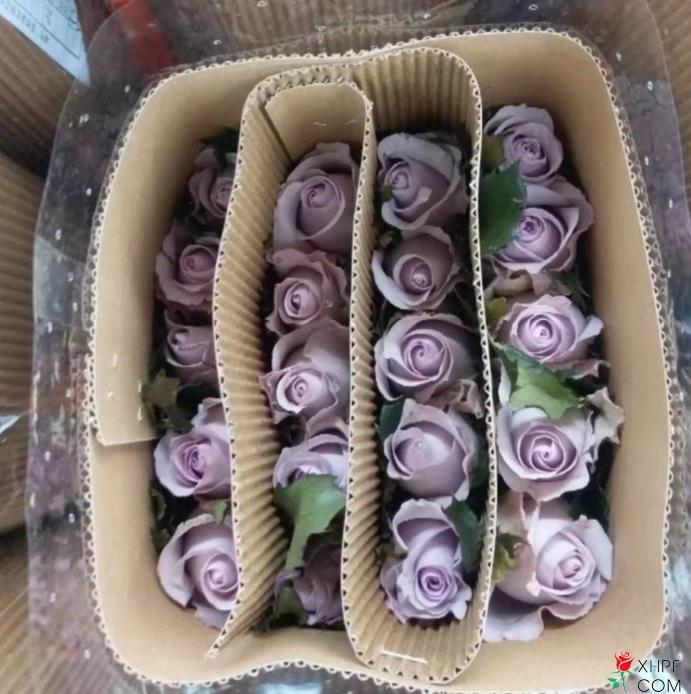 玫瑰花保鲜